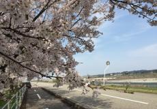 ランニング日記 4月6日 「お花見下見RUN」