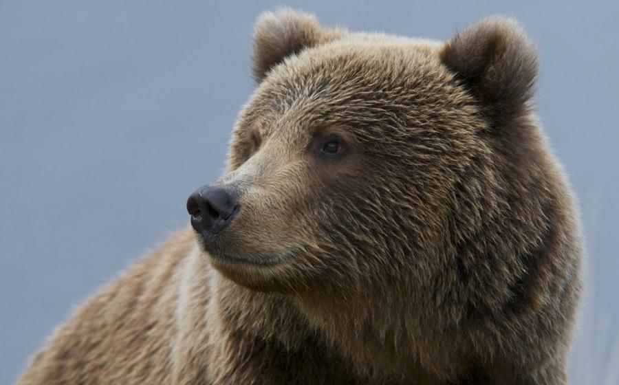 クマの画像 p1_33
