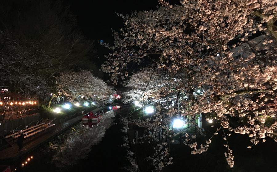 夜桜 お花見ナイトランを終えて。